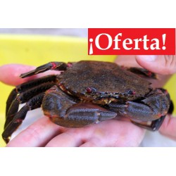 Nécora (Lote 2 kg.) - OFERTA
